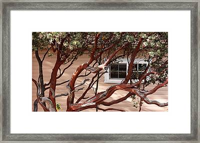 Manzanita Framed Print by Denice Breaux