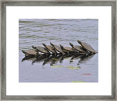 Map Turtles Framed Print by Tony Beck