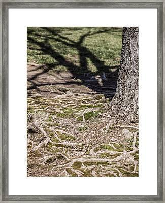 Maple Framed Print by Carl Engman