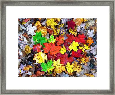 Framed Print featuring the photograph Maple Carpet by Jackie Carpenter