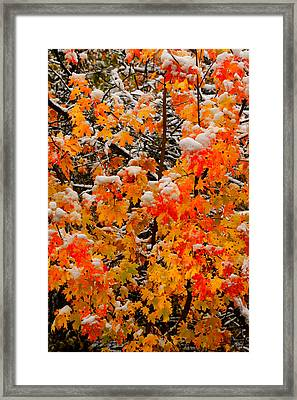 Maple Glow Limited Edition Framed Print