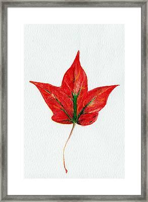 Maple Leaf Framed Print by Anastasiya Malakhova