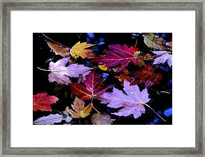 Maple Leaf Float Framed Print