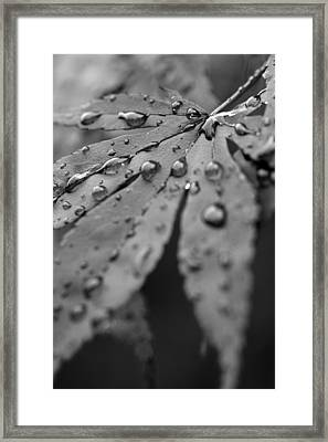 Framed Print featuring the photograph Maple Leaf In Black And White by Bob Noble Photography