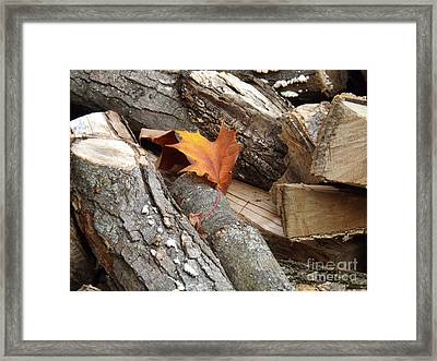 Maple Leaf In Wood Pile Framed Print by Brenda Brown