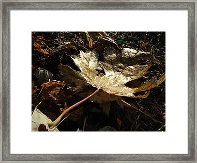 Framed Print featuring the photograph Maple Leaf by J L Zarek