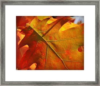 Maple Leaf Macro Framed Print by Carol Toepke