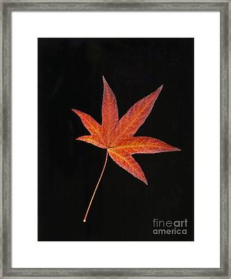 Maple Leaf On Black 2 Framed Print
