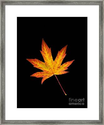 Maple Leaf On Black Framed Print