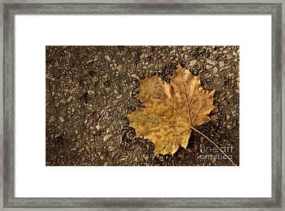 Maple Leaf On The Ground Framed Print by Jolanta Meskauskiene