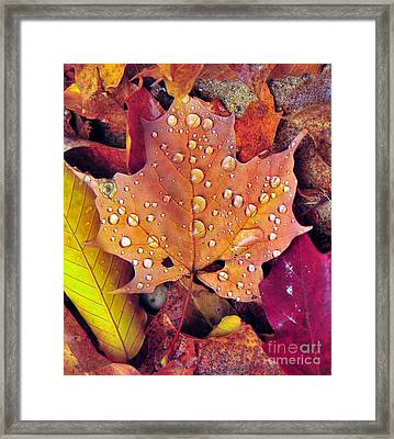 Maple Leaf With Raindrops Framed Print by Terri Gostola