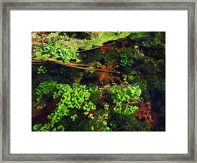 Maple Leaves And Watercress Framed Print by Robin Street-Morris