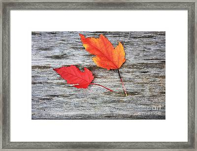 Maple Leaves Framed Print by Gerry Bates