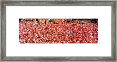 Maple Leaves On The Garden Framed Print by Panoramic Images