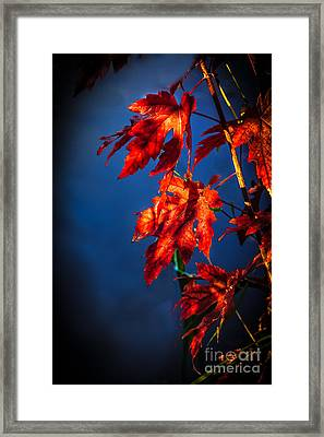Maple Leaves Shadows Framed Print by Robert Bales