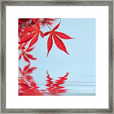 Maple Reflection Framed Print