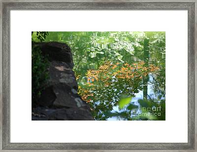 Maple Reflections Framed Print