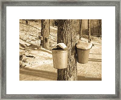 Maple Sap Buckets Framed Print by Edward Fielding