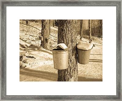 Maple Sap Buckets Framed Print