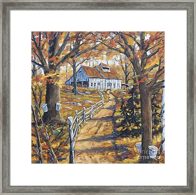 Maple Sugar Bush  Road By Prankearts Framed Print by Richard T Pranke