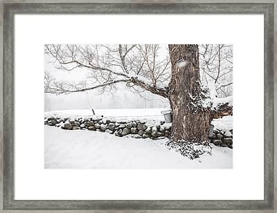Framed Print featuring the photograph Maple Sugaring by Robert Clifford