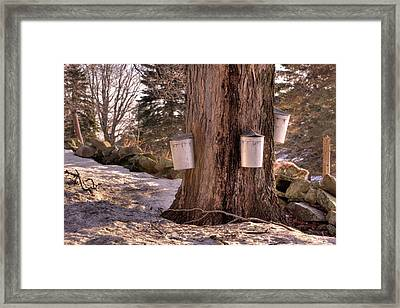 Maple Syrup Buckets Framed Print by Tom Singleton