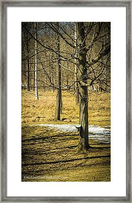Maple Syrup Time Framed Print