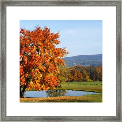 Maple Tree Framed Print by David Simons