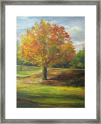 Maple Tree Framed Print