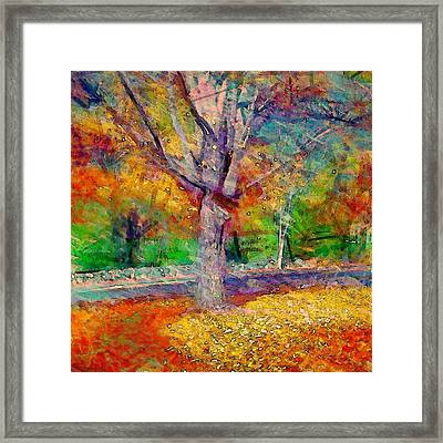 Maple Tree In Autumn - Square Framed Print