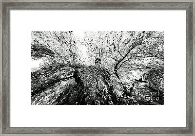 Framed Print featuring the photograph Maple Tree Inkblot by CML Brown