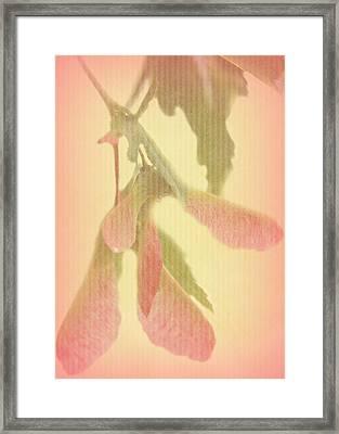 Maple Tree Framed Print