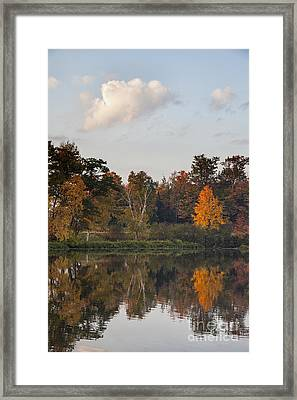 Maple Tree Reflection Framed Print