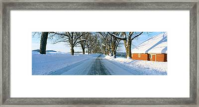 Maple Trees In Snow, Lyndonville Framed Print by Panoramic Images