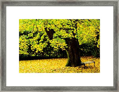 Maple Trees  Framed Print by Tommytechno Sweden