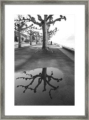 Maples Along Quai Perdonnet Framed Print