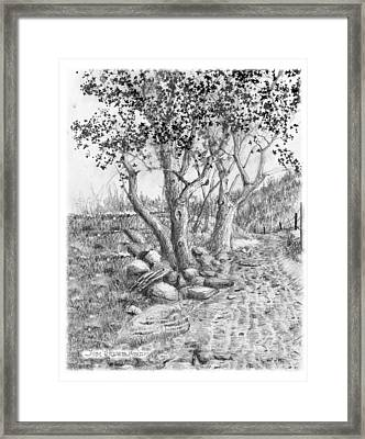 Maples Framed Print
