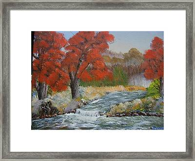 Maples On A Mountain Stream Framed Print by Joe Reynolds