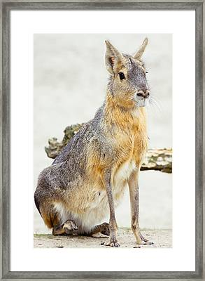 Mara Portrait Framed Print by Pati Photography