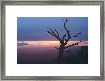 Marble View Snag Framed Print