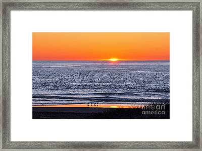 Marbled Godwits Reflecting A Sunset Framed Print
