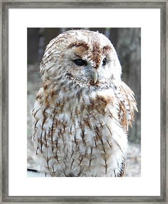Marbled Owl Framed Print