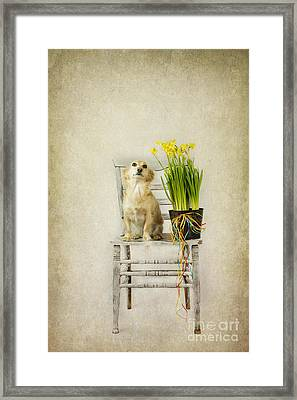 March Framed Print by Elena Nosyreva