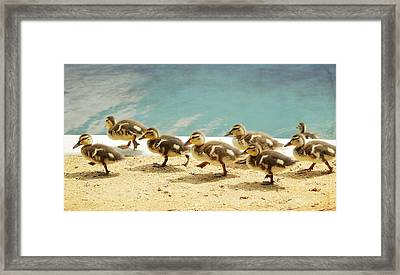 March Of The Ducklings Framed Print by Fraida Gutovich