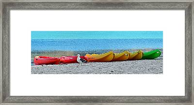 March Of The Seagull Framed Print by Christine Till