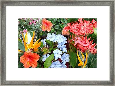 Marco Flowers Framed Print