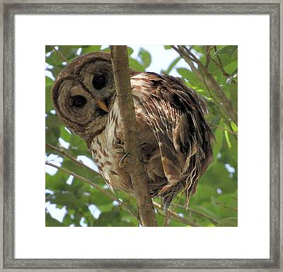 Framed Print featuring the photograph Marcus' Backyard Hooter by AnnaJo Vahle