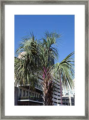 Mardi Gras Beads In Palm Framed Print by Kay Pickens