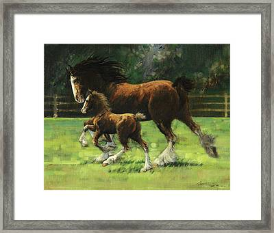 Clydesdale Mare And Colt Framed Print by Don  Langeneckert