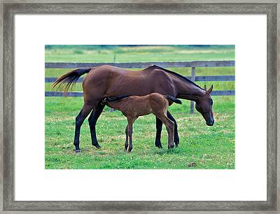 Mare And Foal Framed Print by Gail Maloney